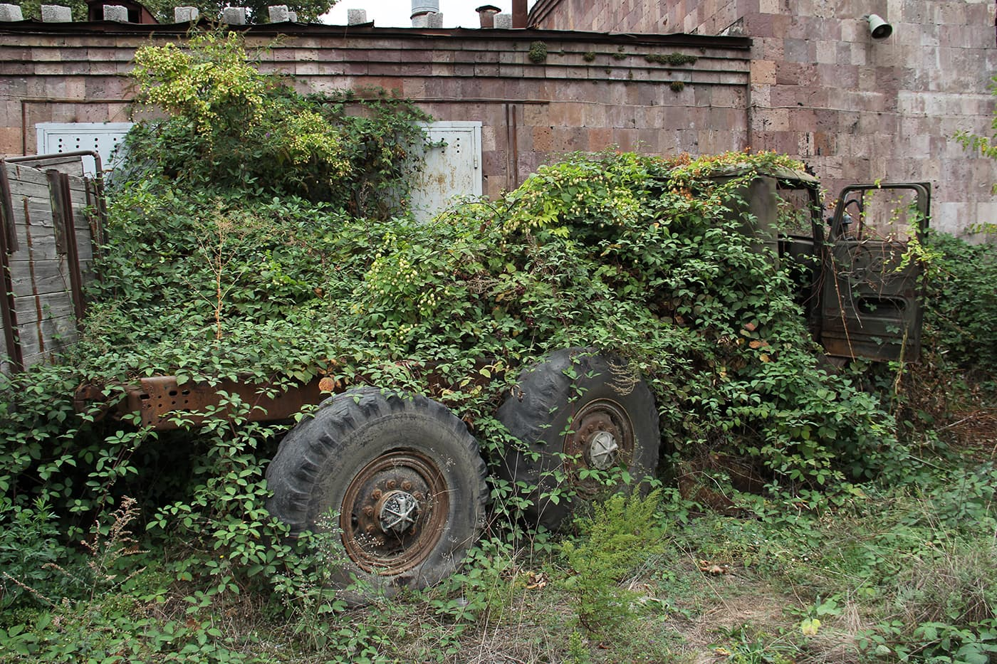 Old truck covered in vines